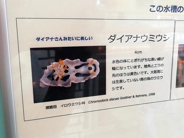 ウミウシ水族館ダイアナウミウシの説明