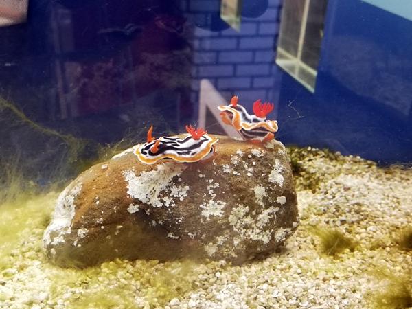 ウミウシ水族館