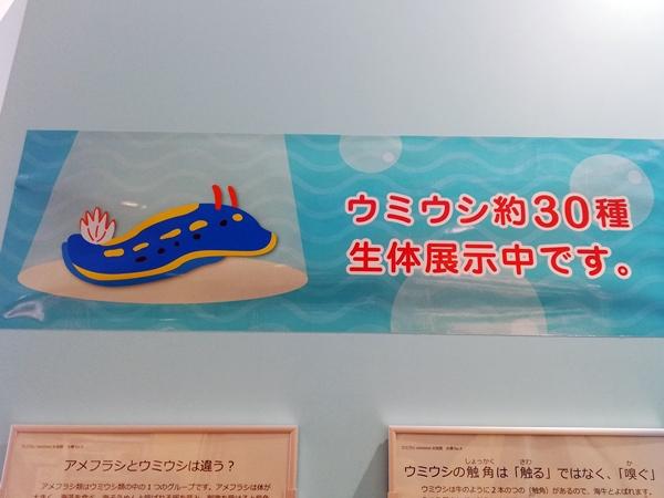 ウミウシ水族館の看板
