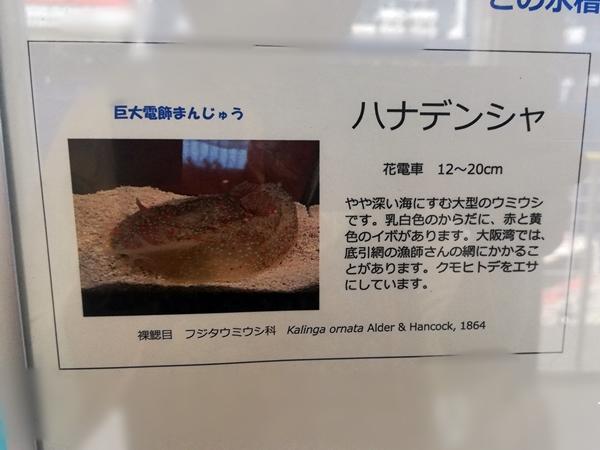 ウミウシ水族館ハナデンシャの説明