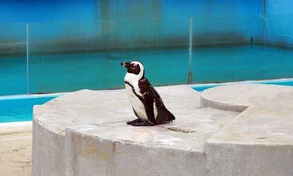 志摩マリンランド ペンギン