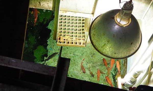 志摩マリンランド 水族館裏方探検
