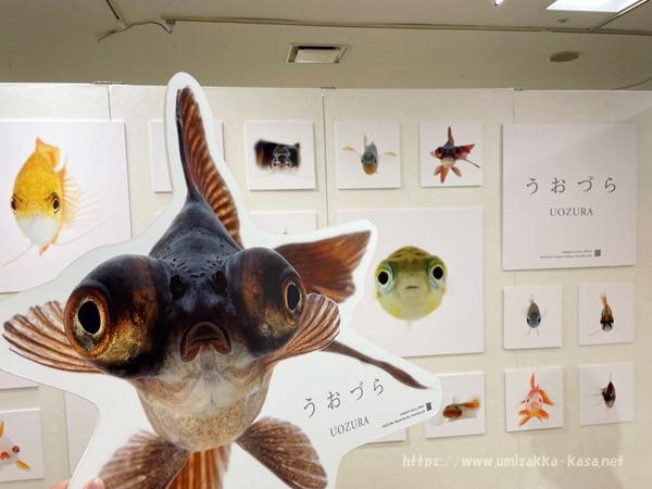金魚と海のいきもの展2021 (6)