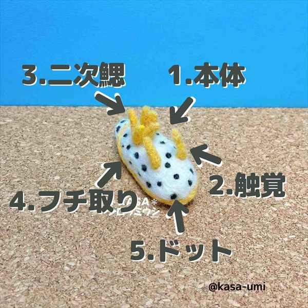 KASAオーダーウミウシ (5)